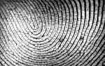 Увеличивает ли сканер отпечатков пальцев iPhone 5S вероятность кражи?